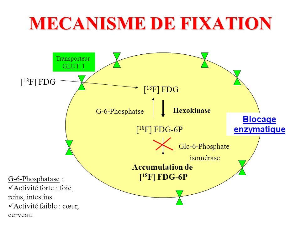 MECANISME DE FIXATION [18F] FDG [18F] FDG Blocage enzymatique